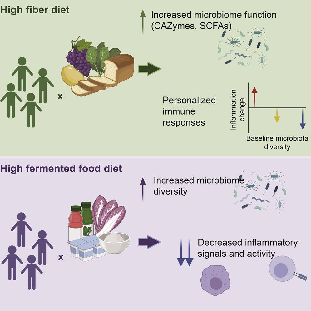 schema resumant impact regimes riches fibres et aliments fermentes