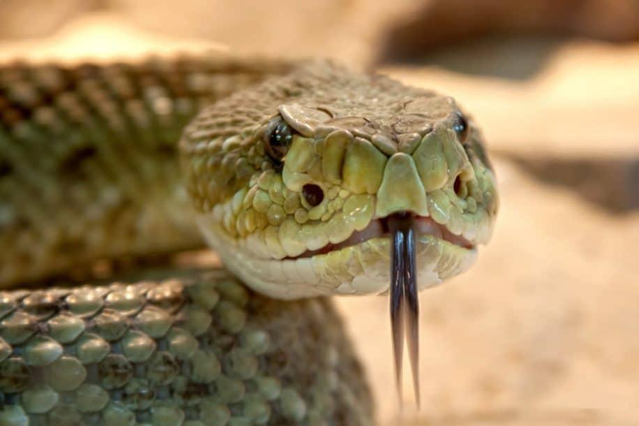 venin serpent bioadhésif plaies