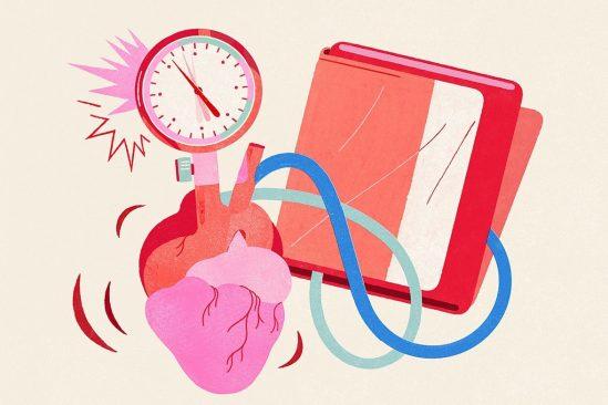 biologistes decouvrent comment corps regule pression sanguine