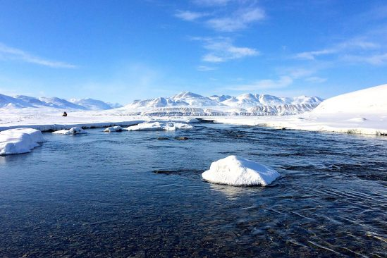 changement climatique augmente risque propagation virus anciens animaux arctique lac hazen