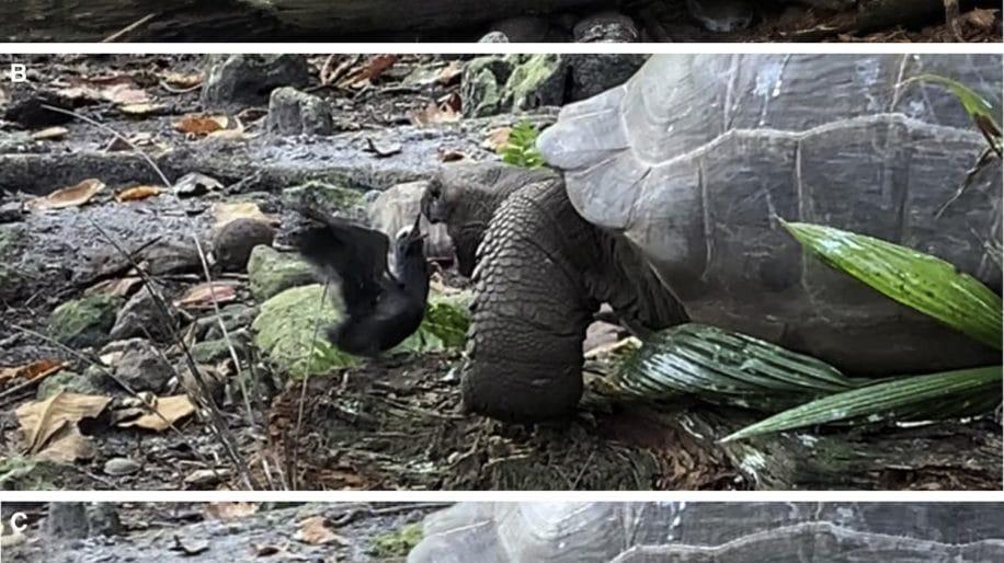 chasse tortue oiseau