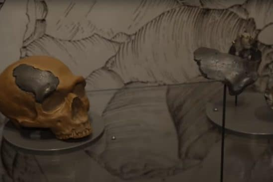 crâne néandertal doggerland