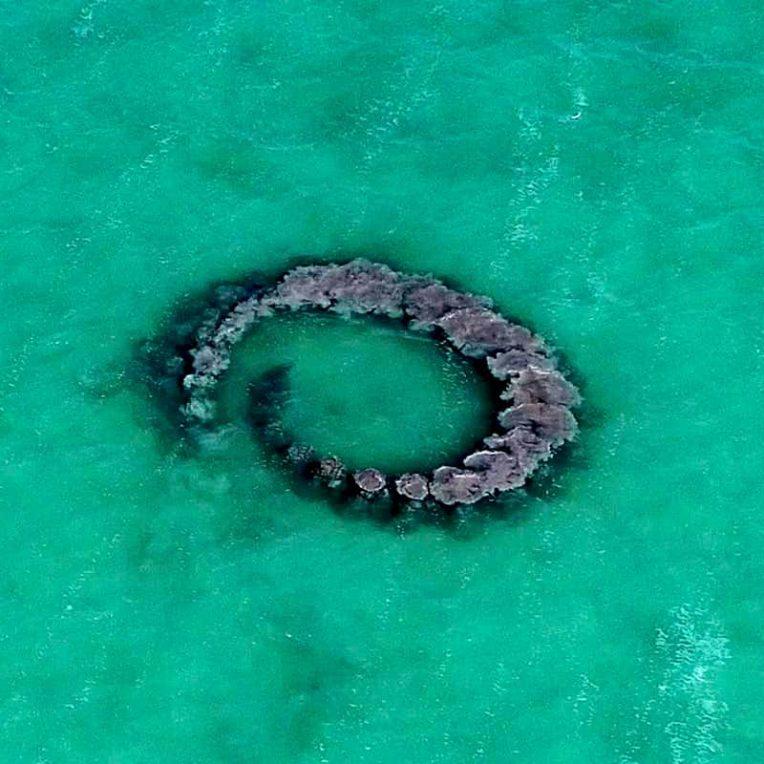 dauphins apercus en train pieger poissons dans anneaux boue