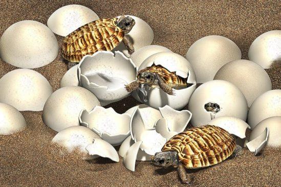 fossile oeuf embryon tortue crétacé