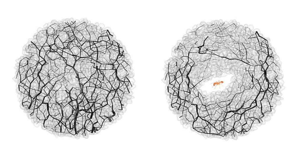 fourmis tunnels creuses forces grain grain