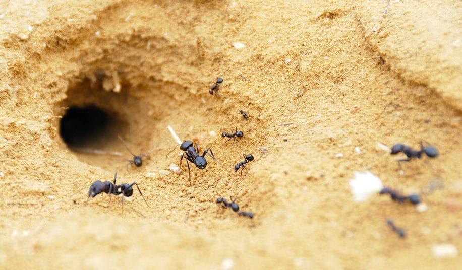 fourmis utilisent physique sol pour creuser tunnels un metre long qui durent decennies