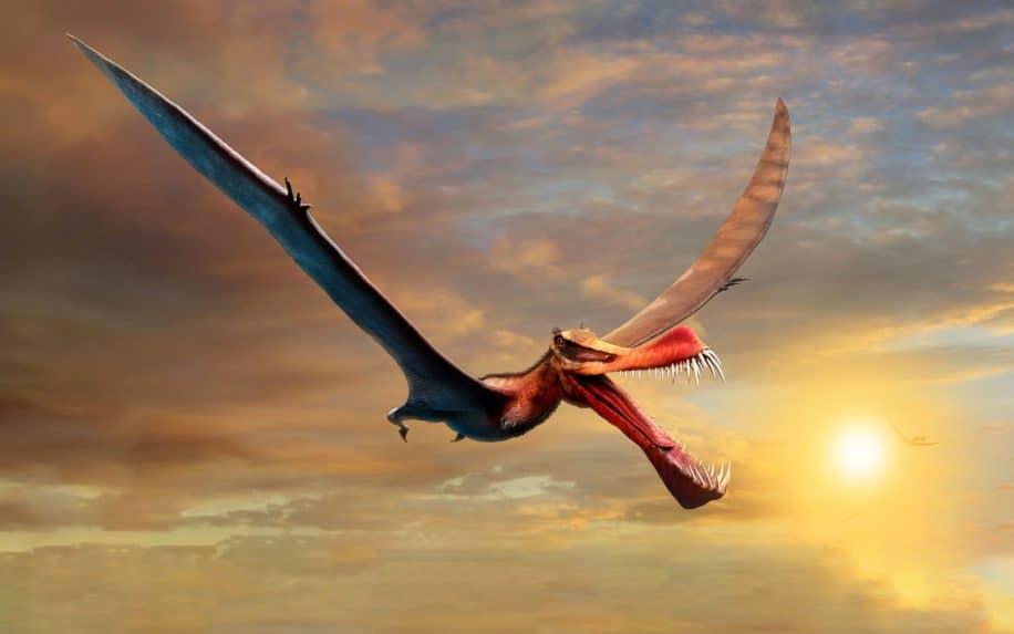 nouvelle espèce ptérosaure australie