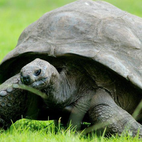 pourquoi tortues vivent aussi longtemps