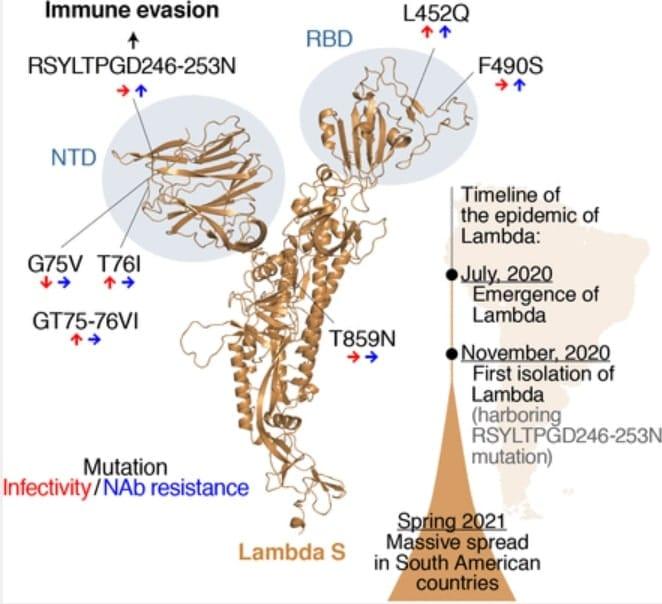 schema sites mutations lambda