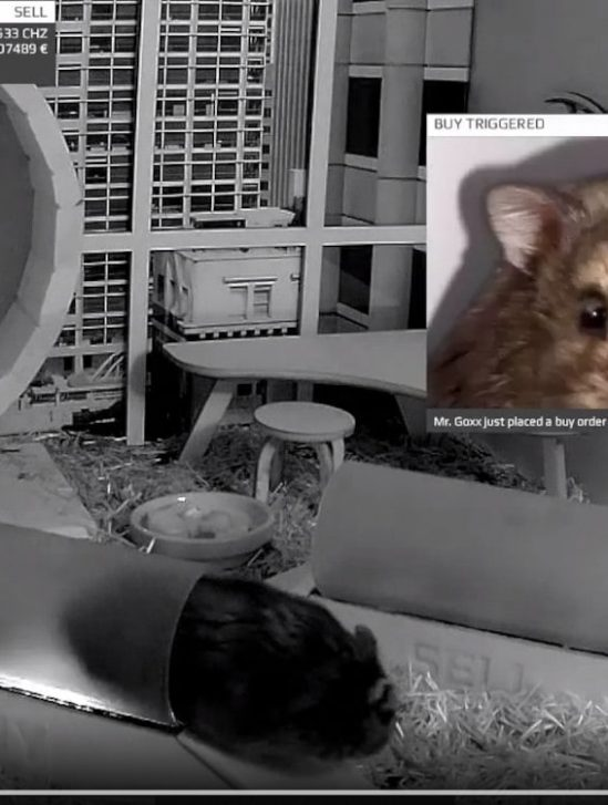 cage trading cryptomonnaies hamster