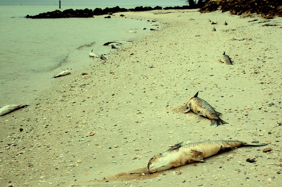 chercheurs alertent signes extinction masse imminente