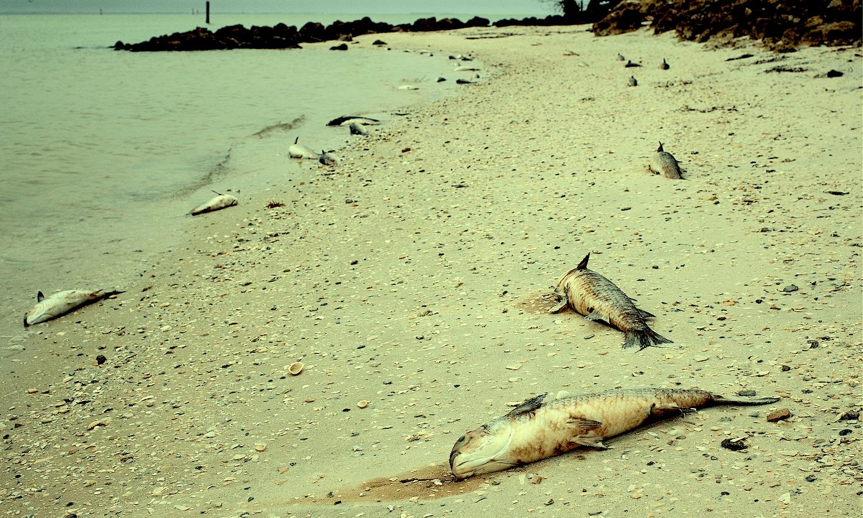 Des chercheurs alertent sur les signes d'une extinction de masse imminente