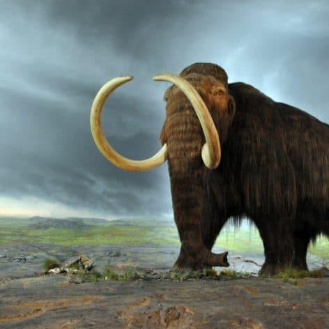 création hybride mammouth laineux éléphant