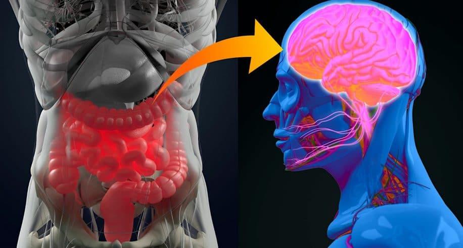 depression troubles bipolaires schizophrenie partagent similitudes bacteries intestinales