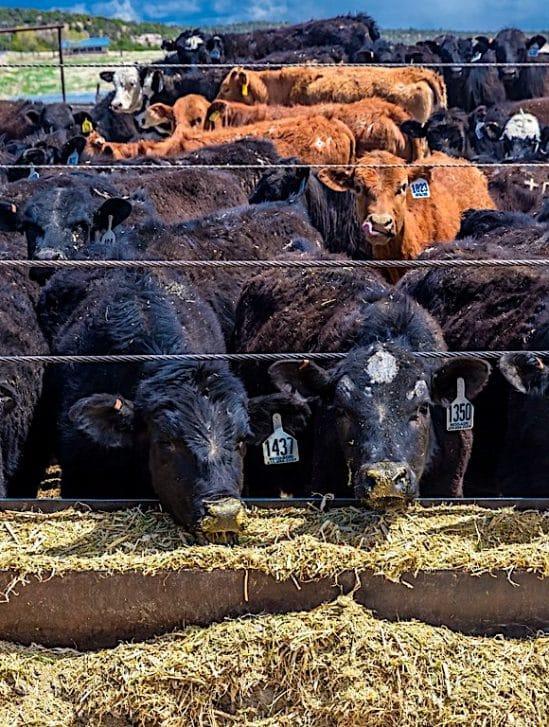 emissions production alimentaire representent plus un tiers total mondial