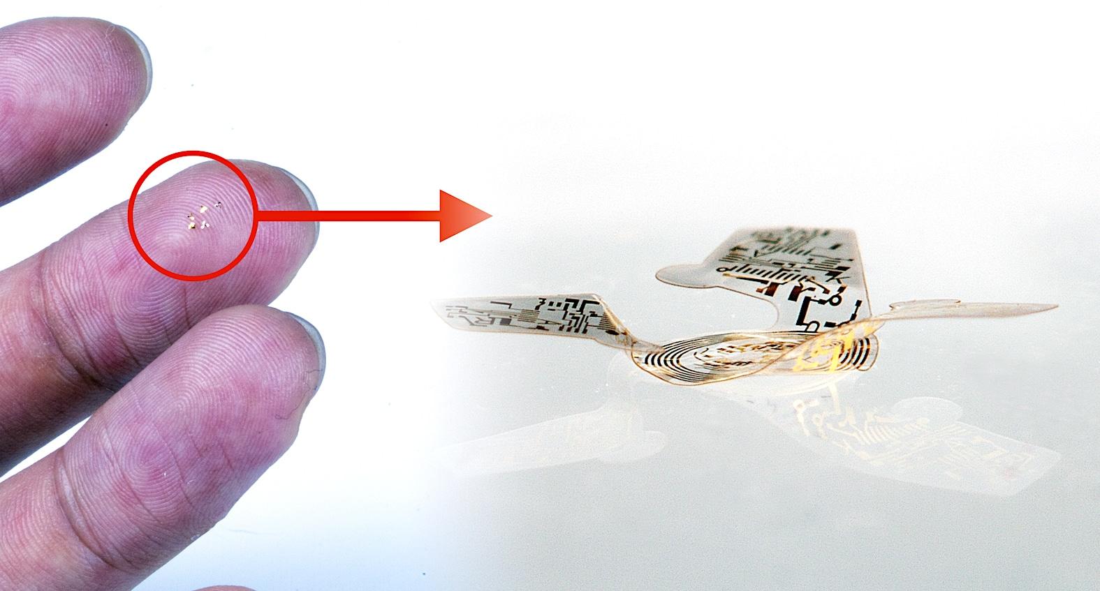 """Cette """"micropuce ailée"""" est la plus petite structure volante jamais conçue. Elle pourrait servir à la surveillance des populations animales"""