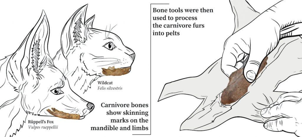 diagram of skinning tools bone preparation furs