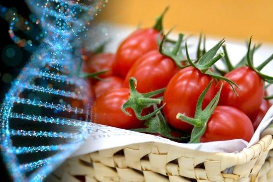 tomate premier aliment genetiquement modifie crispr mis en vente