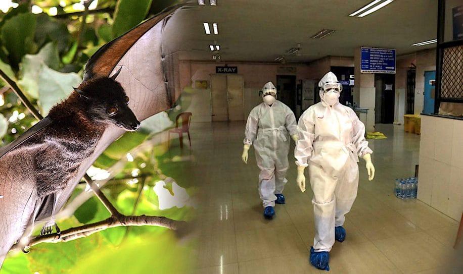 virus nipah extremement mortel se propage inde