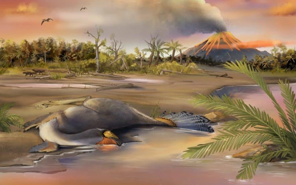 vue artiste Caudipteryx biote jehol