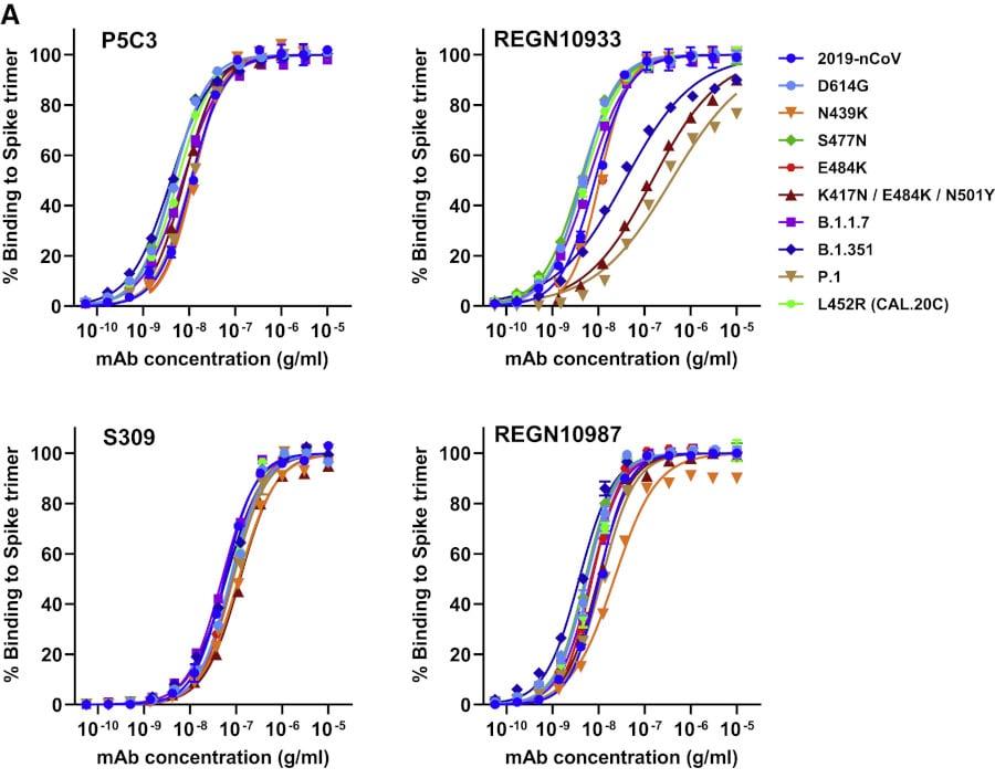 Affiniteit voor eiwitbindend antilichaam