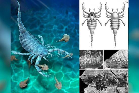 ancien scorpion mer taille chien decouvert chine