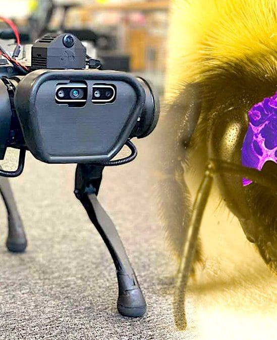 cerveau artificiel inspire insectes