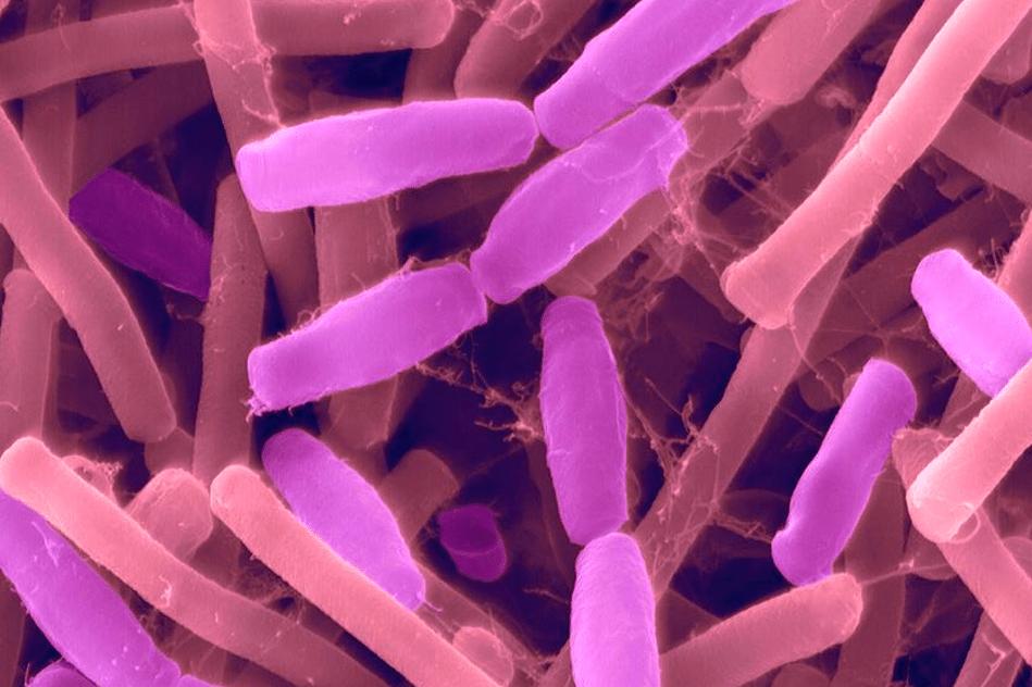 genie genetique bacteries modifiees nous guerir interieur cellules