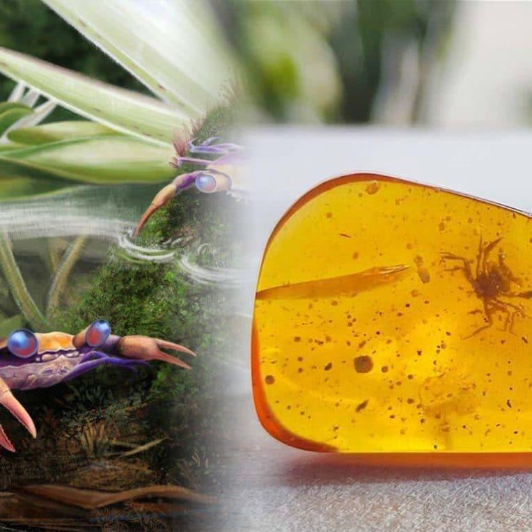 premiere decouverte crabe ere dinosaures piege dans ambre