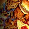 principaux fast foods produits perturbant hormones