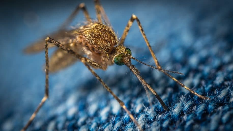 recommandation OMS vaccin paludisme