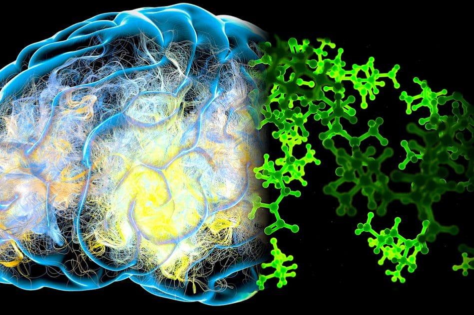 regime base acides amines essentiels prevenir demence