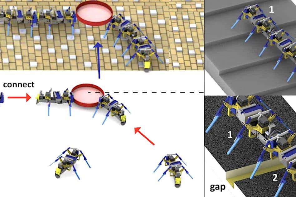 robots inspires fourmis travaillent essaim franchir obstacles soulever objets